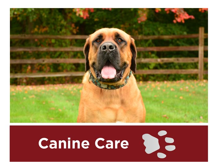 Canine Care in Granby CT