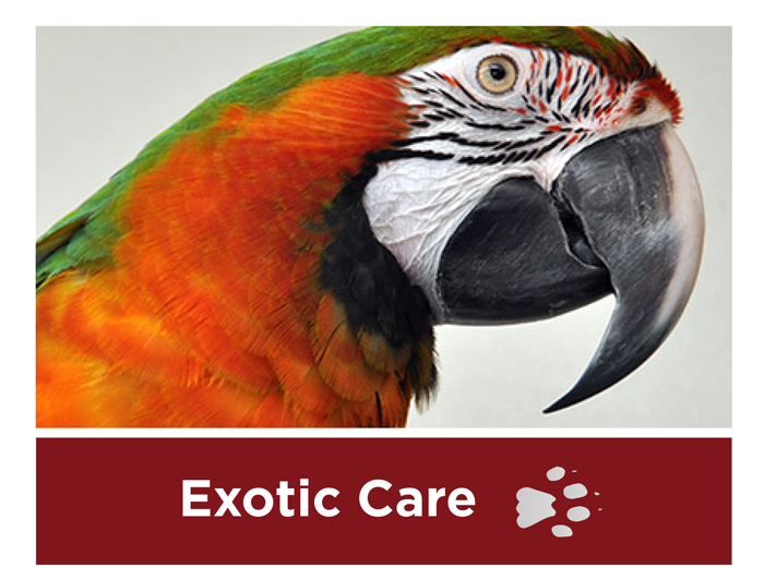 exotic-pet-care