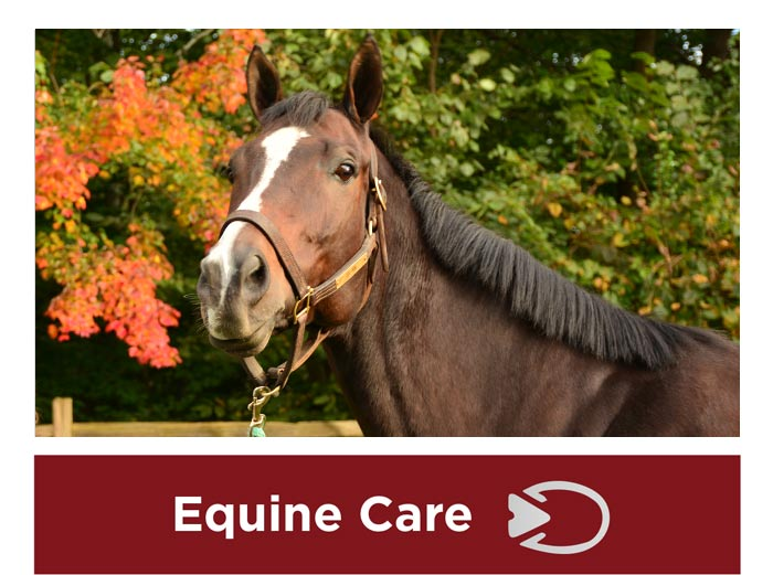 Equine Care in Granby CT