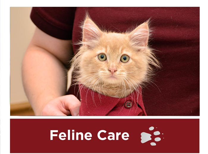 Feline Care in Connecticut and West Massachusetts