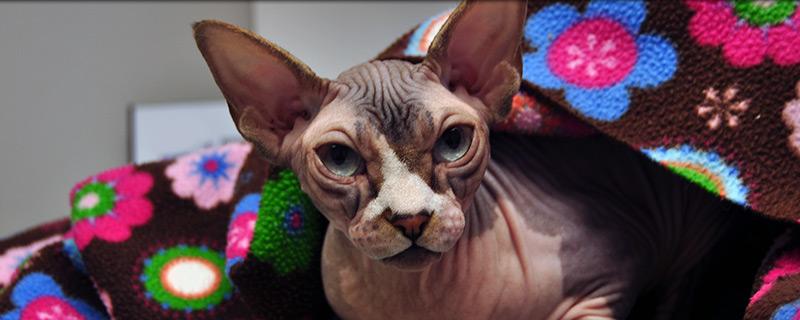 cat-veterinarian-grandby-ct