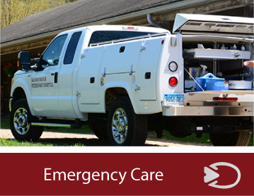 emergency-equine-care