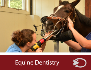 equine-dentistry Care in Connecticut and West Massachusetts