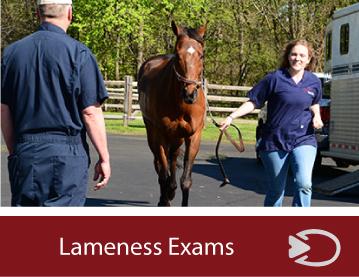 equine-lameness-exams