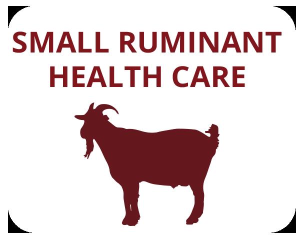 goat-health-care