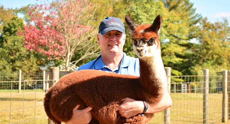 Alpaca Veterinary Care in Connecticut and West Massachusetts