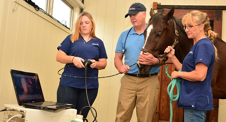 equine-endoscopy in Connecticut and West Massachusetts