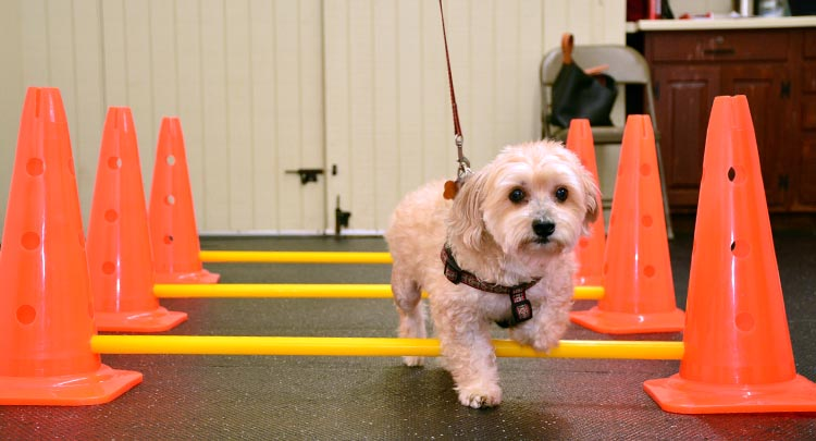 Pet Rehabilitation