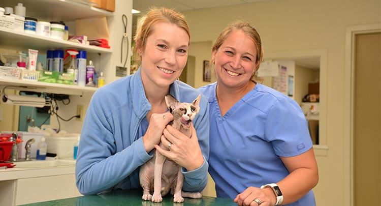 Adult Cat Care