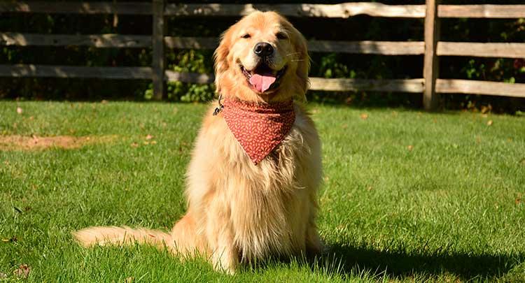 Canine Veterinary Care in Granby CT