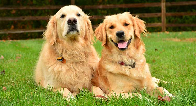 Parasite protection for pets