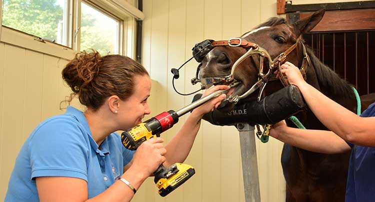 equine-dentistry in Connecticut and West Massachusetts