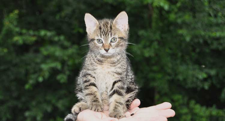 Kitten Veterinary Care in Connecticut and West Massachusetts